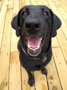 smiling_dog_OakleyOriginals