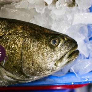 Fisch für Sushi kaufen