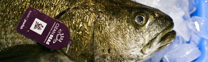 Wie erkennt man frischen Fisch für Sushi